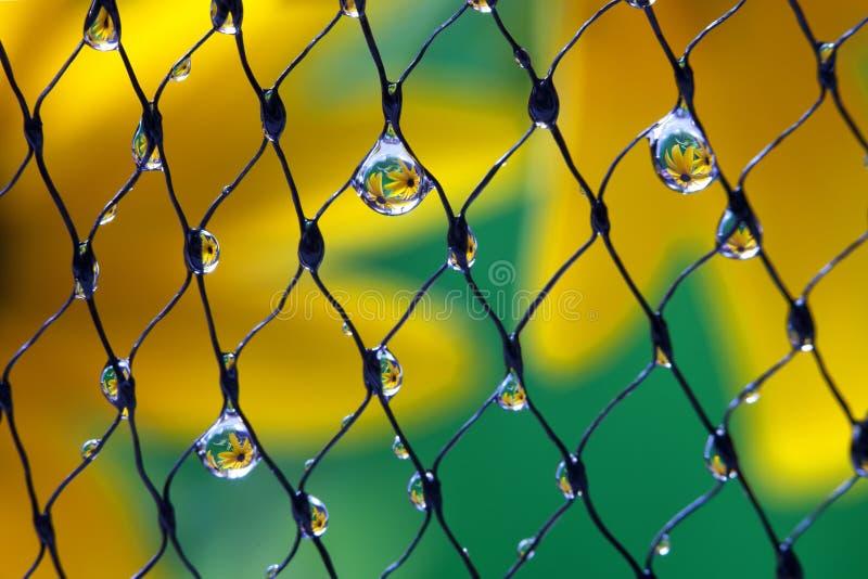 Gotas de las flores foto de archivo libre de regalías