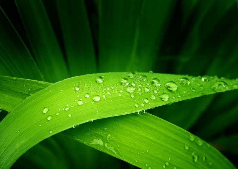 Gotas de lluvia fotografía de archivo
