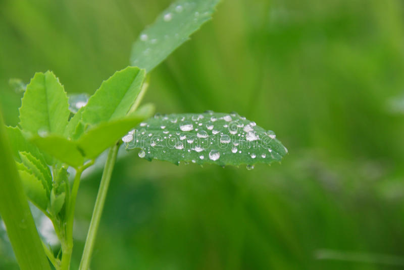 Gotas de lluvia de la mañana imagen de archivo