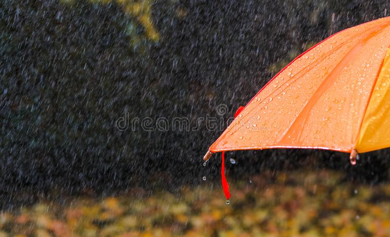 Gotas de lluvia en el paraguas anaranjado brillante debajo de las fuertes lluvias en el parque del otoño, primer fotos de archivo