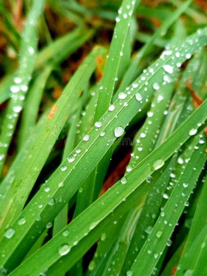 Gotas de lluvia en la hierba fotos de archivo libres de regalías
