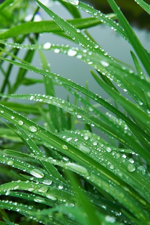 Gotas de lluvia en la hierba imágenes de archivo libres de regalías