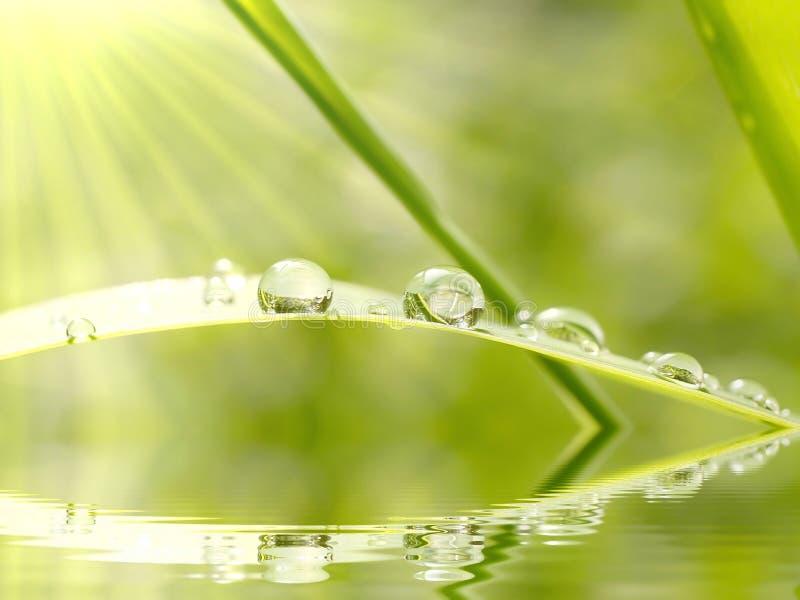 Gotas de lluvia en la hierba en la salida del sol fotos de archivo libres de regalías