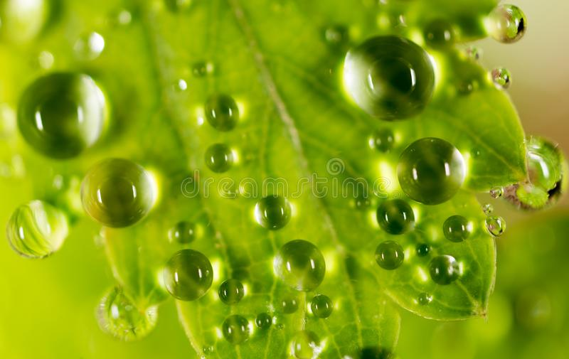 Gotas de orvalho em uma folha verde foto de stock royalty free