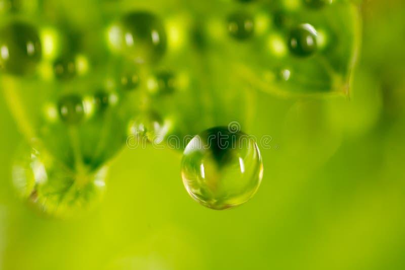 Gotas de orvalho em uma folha verde fotografia de stock royalty free