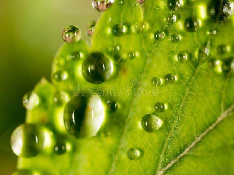 Gotas de orvalho em uma folha verde imagens de stock