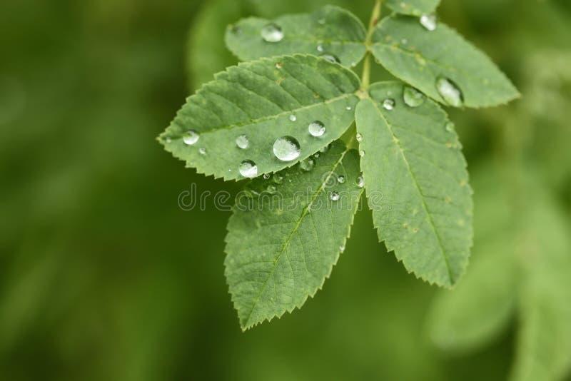 Gotas de orvalho na folha verde imagens de stock royalty free