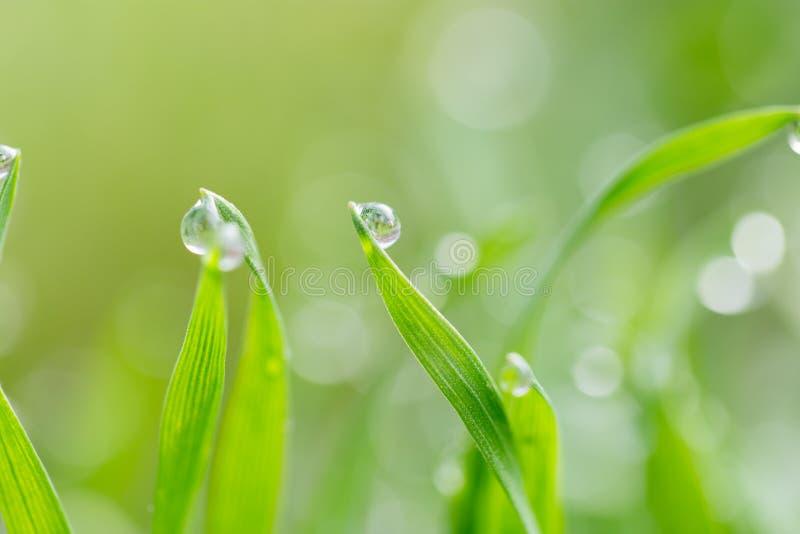 Gotas de orvalho na grama verde Macro imagem de stock