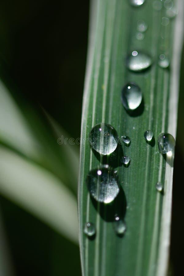 Gotas de rocío en la hoja de la hierba fotografía de archivo