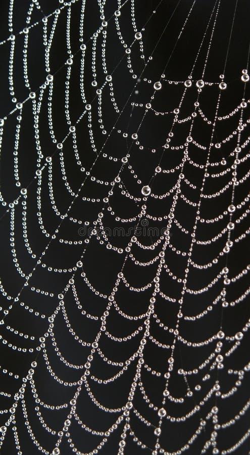 Gotas de rocío en spiderweb imagen de archivo