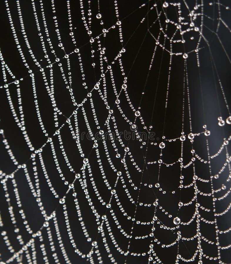 Gotas de rocío en spiderweb fotos de archivo