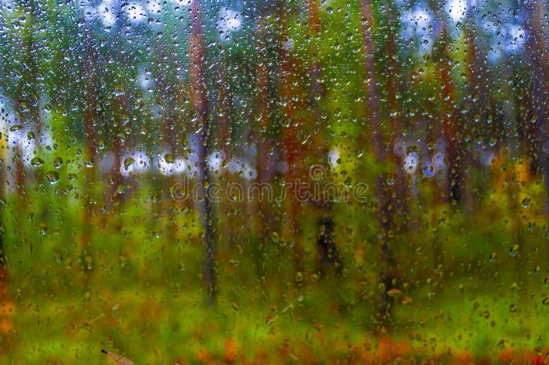 Gotas del agua de la lluvia en ventana Bosque del otoño de la falta de definición en fondo Paisaje lluvioso otoñal imagen de archivo