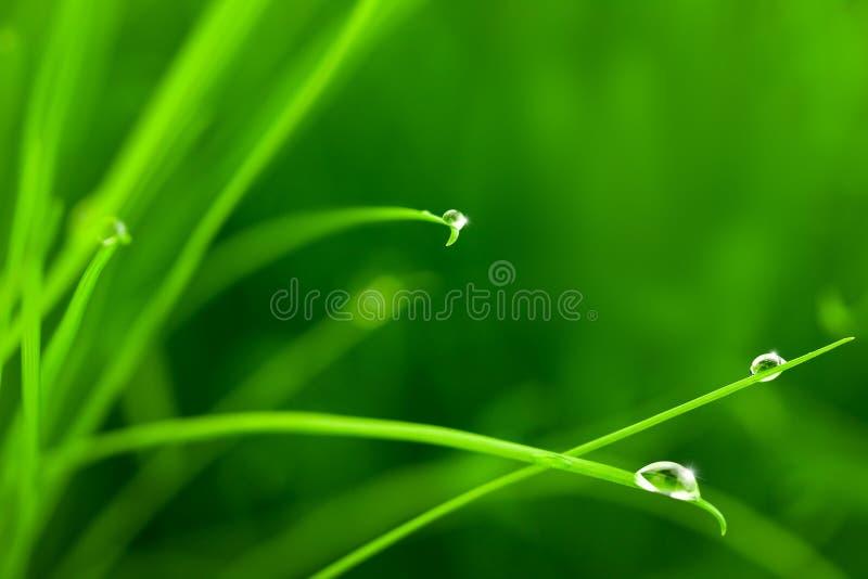 Gotas del agua en hierba con la chispa fotografía de archivo libre de regalías