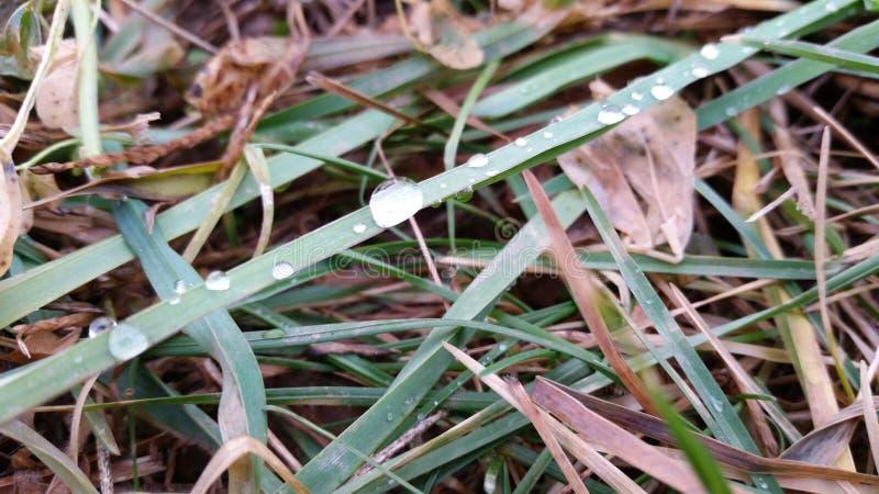 Gotas del agua en la hierba fotografía de archivo