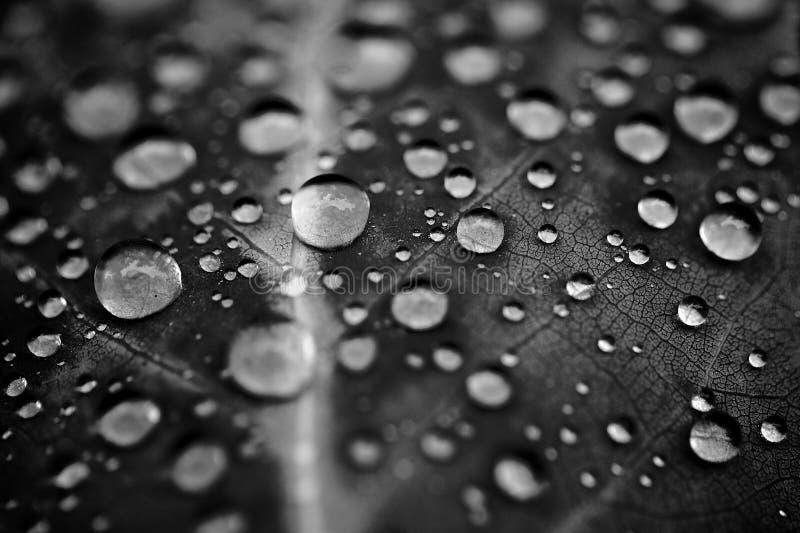 Gotas del agua en la hoja imagen de archivo libre de regalías