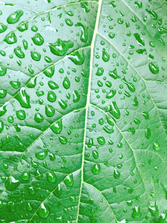 Gotas del agua en la hoja verde imágenes de archivo libres de regalías