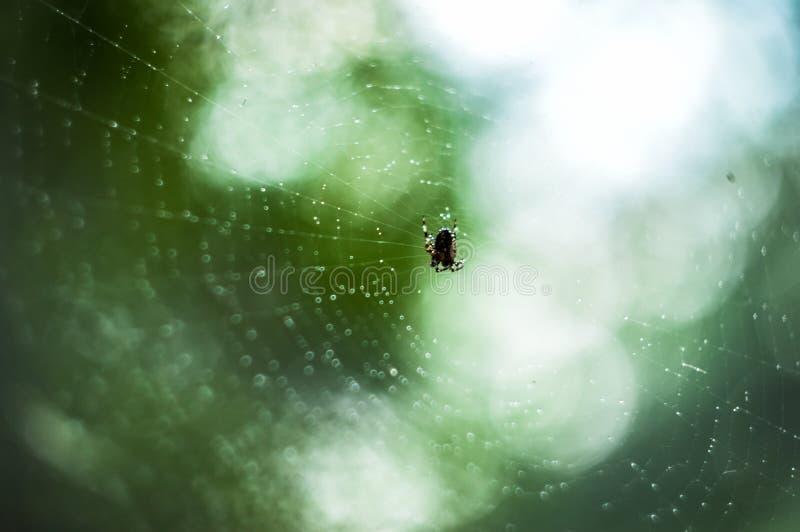Gotas del Web y del agua de araña imágenes de archivo libres de regalías