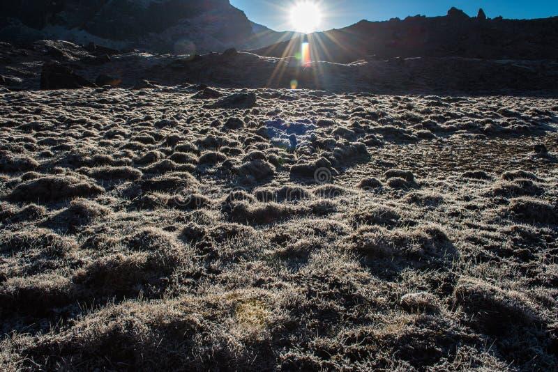 Gotas do orvalho em um fundo do bokeh da grama verde, grama Sun macio imagem de stock royalty free