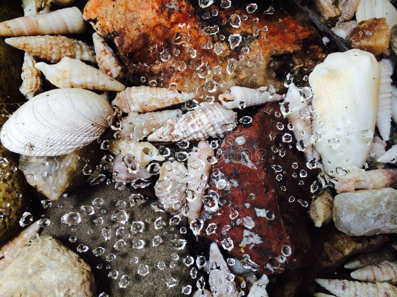 Gotas e shell foto de stock royalty free