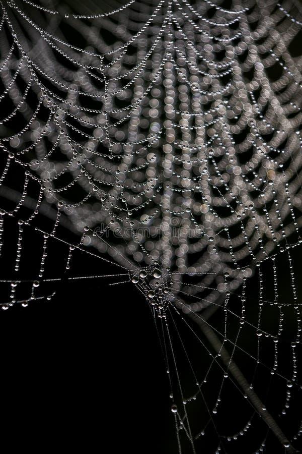 Gotas en un spriderweb foto de archivo