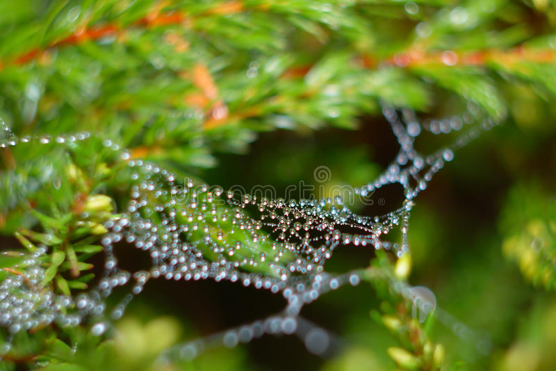 Gotas Que Penduram No Aranha-Web Imagem de Stock Royalty Free