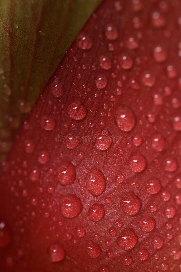 Gotas rojas foto de archivo libre de regalías