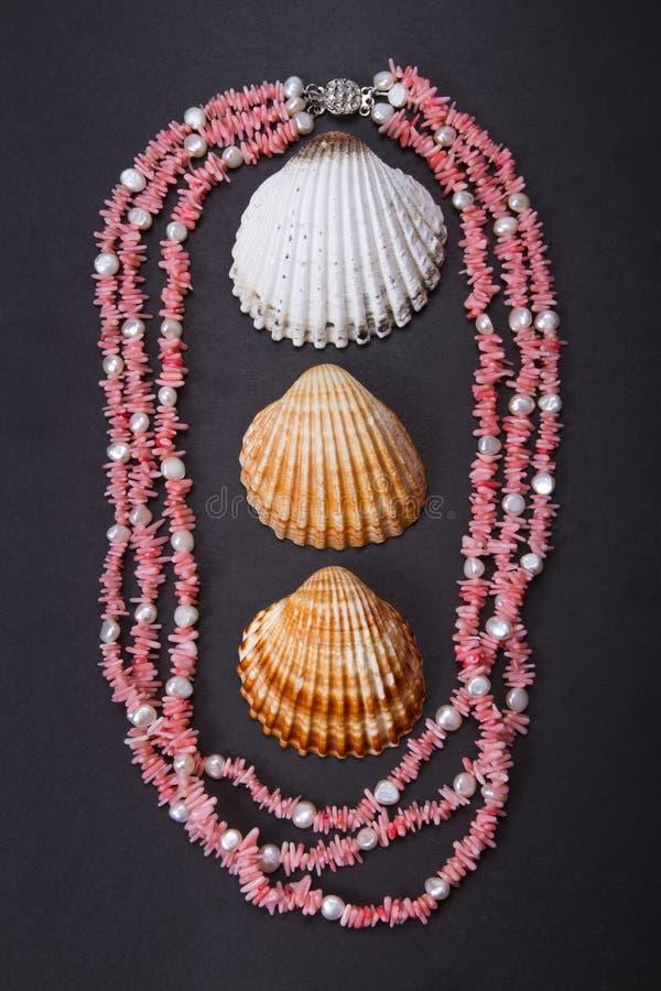 Gotas y seashell coralinos fotos de archivo libres de regalías
