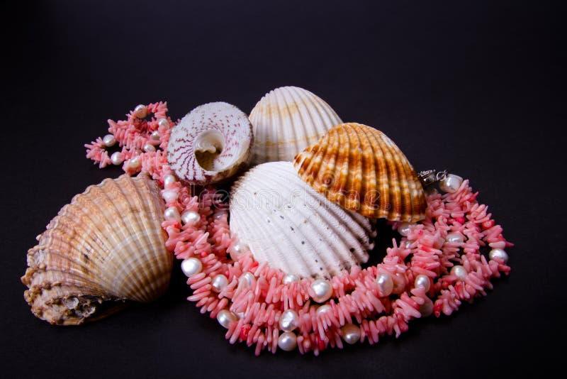 Gotas y seashell coralinos foto de archivo