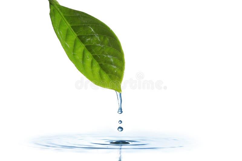 Gotejamento da água imagens de stock royalty free