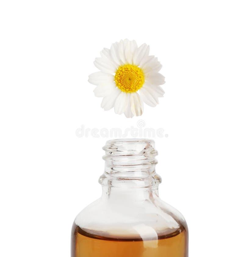 Gotejamento do óleo essencial da pétala da camomila na garrafa de vidro fotografia de stock royalty free