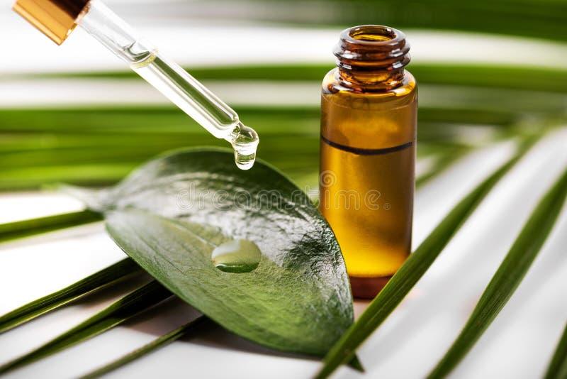 Goteo del aceite esencial en la hoja verde de la pipeta imagenes de archivo