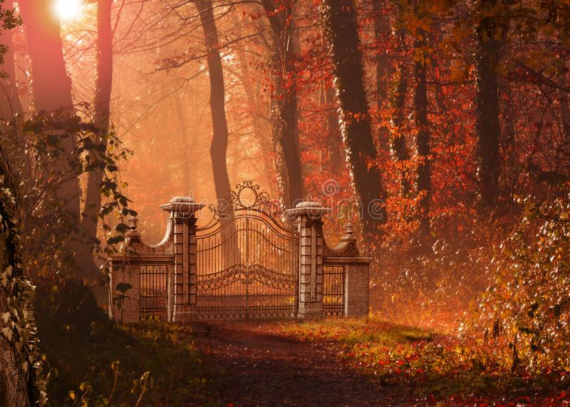 Gothic Gate Blocking a Foot Path in Forest stock photography