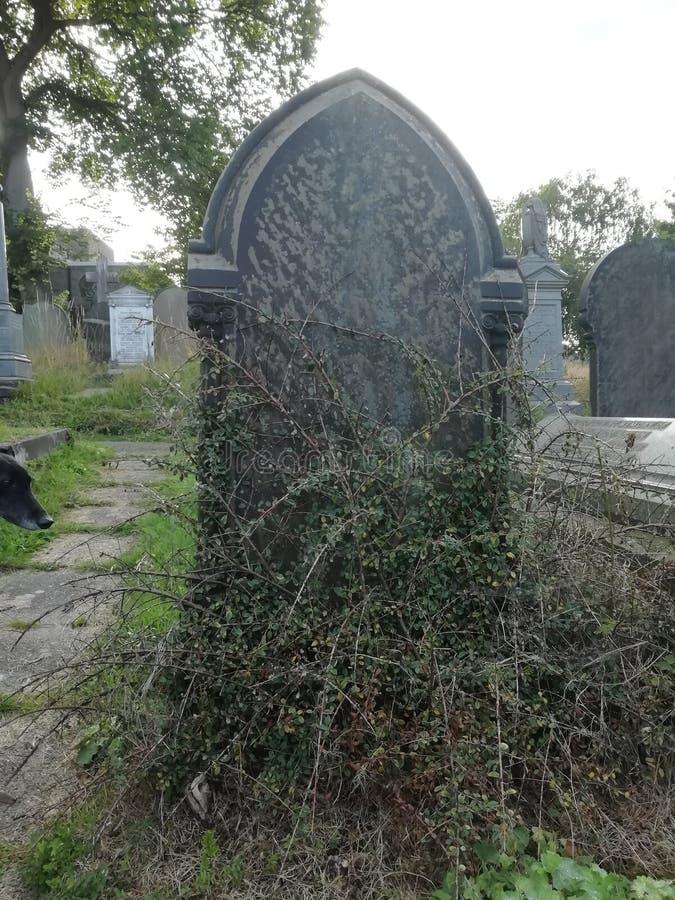 Gothische gravestone met wijnstruik stock foto