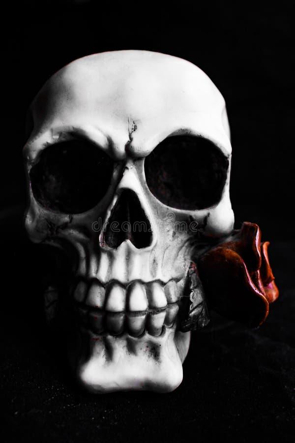 Gotischer Schädel, der eine Rose hält stockbild