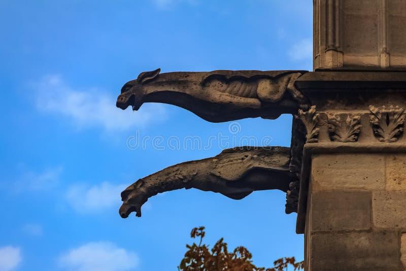 Gotiska vattenkastare som täckas i mossa på fasaden av den berömda Notren Dame de Paris Cathedral i Paris Frankrike med att falla arkivbilder