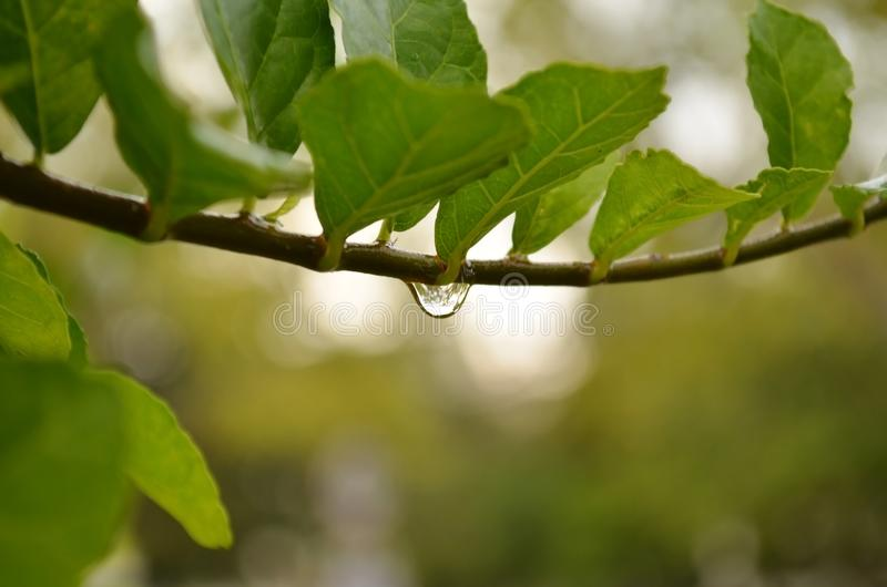 Gotita de agua en licencia en selva imagen de archivo libre de regalías