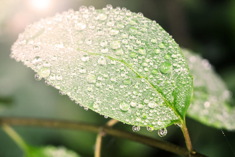 Download Gotita En La Hoja, Momento Fresco Imagen de archivo - Imagen de lluvioso, verde: 42425445