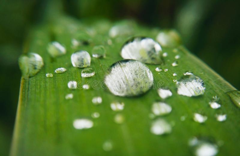 Gotitas de agua en la hoja de la planta fotos de archivo libres de regalías
