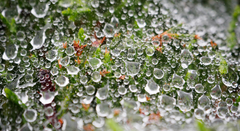 Gotitas de agua en un web de araña foto de archivo