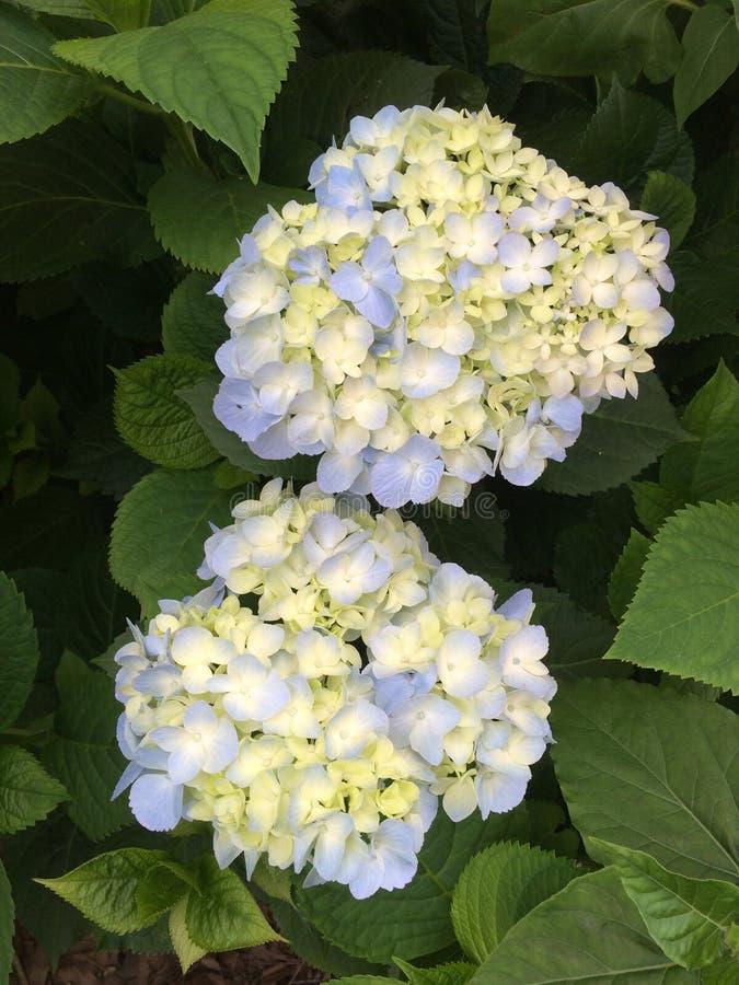 Gott ` s erstaunliche Schaffung von Blumen stockbilder