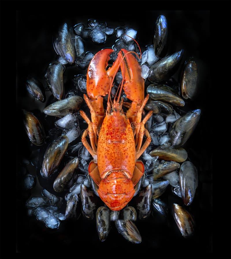 Gotujący homar na łóżku mussels z lodem obraz royalty free