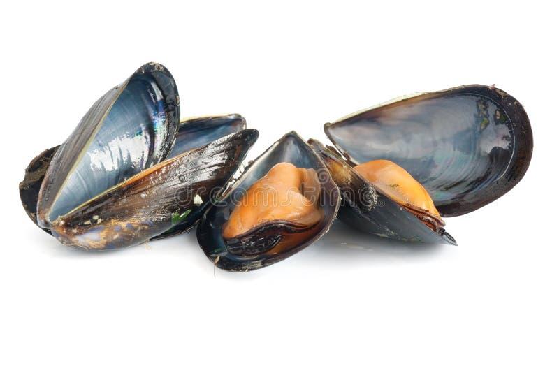 gotujący mussels zdjęcia royalty free