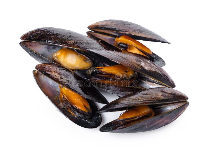 Gotujący mussels zakończenie fotografia stock