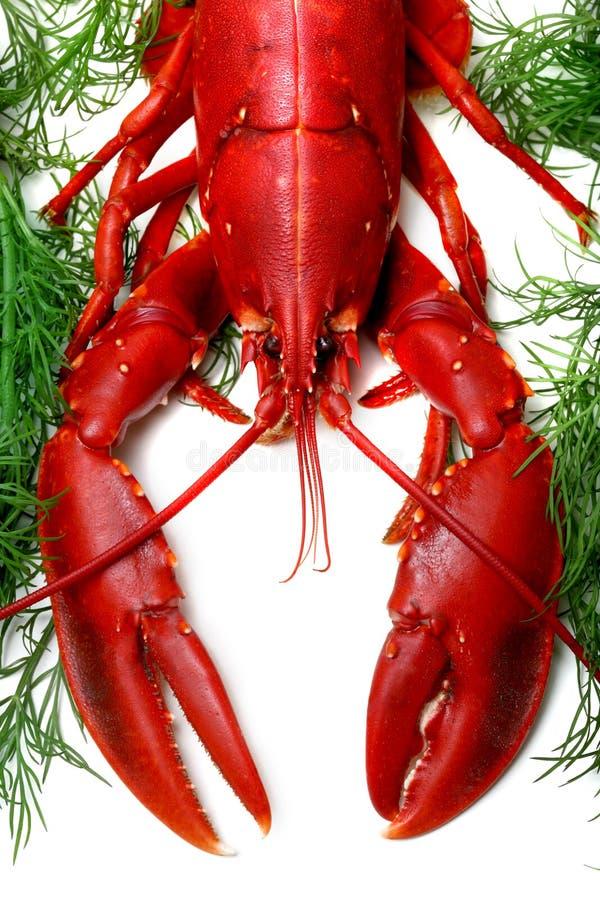 gotuje się homarem przygotowany fotografia stock