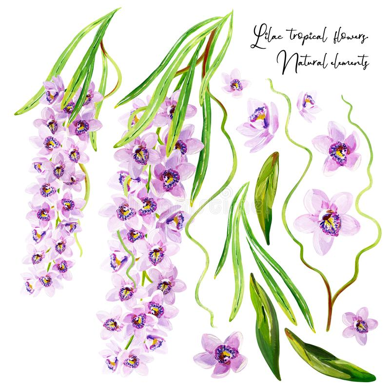 Gouache tropical set with lilac orchids, floral branches and green leaves stock illustration