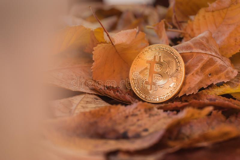 Goud bitcoin met de herfst leafes op achtergrond stock fotografie