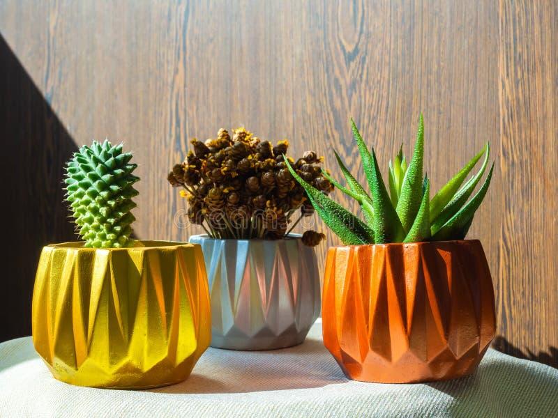 Goud, zilver en koper geschilderde geometrische concrete planters met cactus en succulente installatie Geschilderde concrete pott stock fotografie