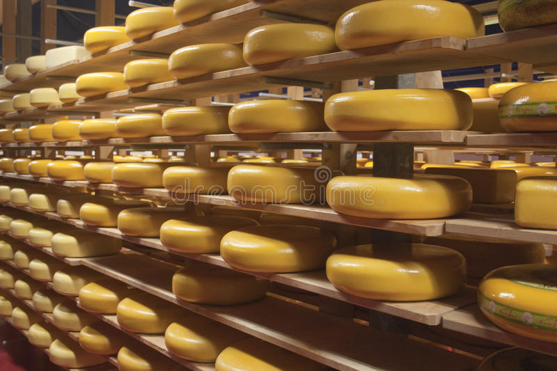 Gouda cheese wheels on shelves in a shop. Several mature Gouda cheese-wheels displayed on shelves at the bio organic cheesemaking shop royalty free stock image