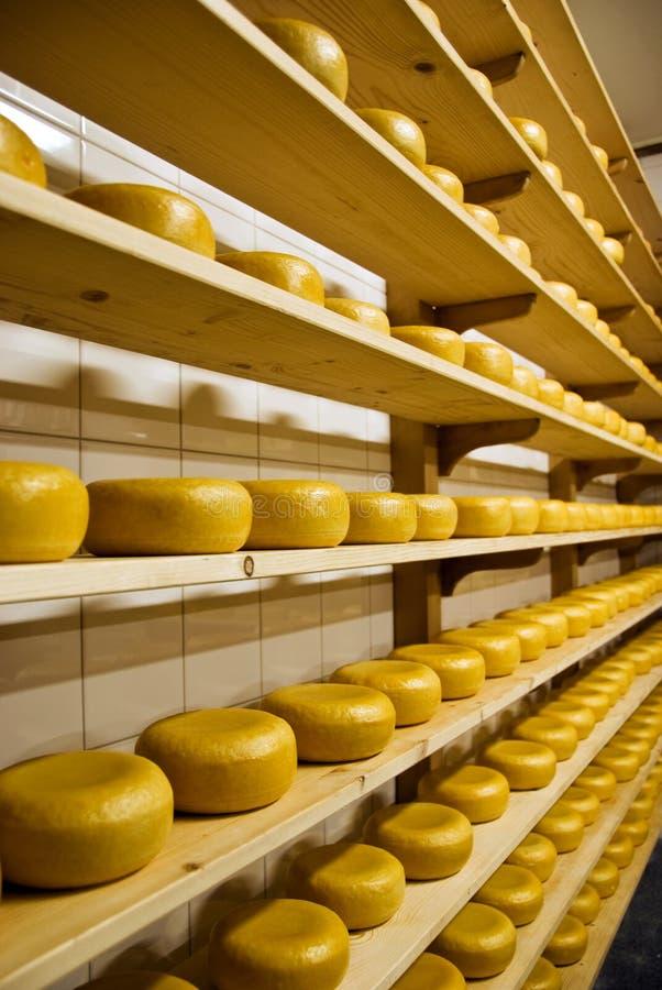 Gouda - queijo holandês imagem de stock