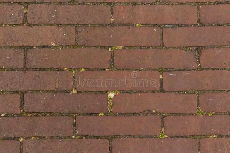 Gouda, South Holland/The Netherlands - May 19 2018: Small brown stones in the side walk pavement shot top down in the city center. Of Gouda royalty free stock photo